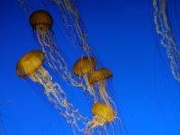 Banco di meduse