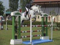 Meraviglioso cavallo bianco