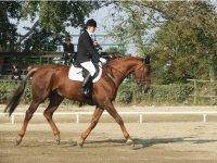 Scuola di equitazione vercellese