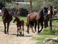 Cavalli di razza