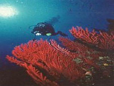 Isla Negra II Diving