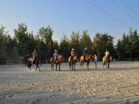 Corsi e concorsi di riding horse