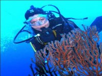 Swimming between corals