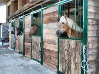Centro Livan vendita cavalli
