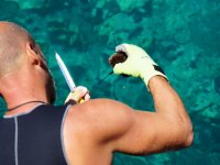 A pesca di ricci