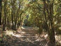 Percorsi nel bosco