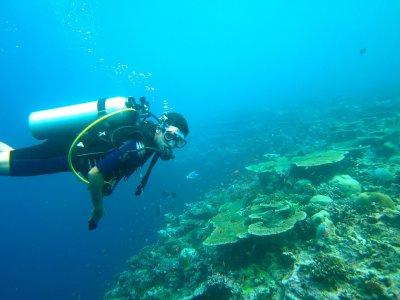 Diver Sea Calabria