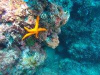 Una bellissima stella marina