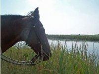equitazione e natura