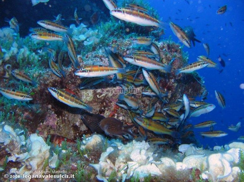 Danza subacquee