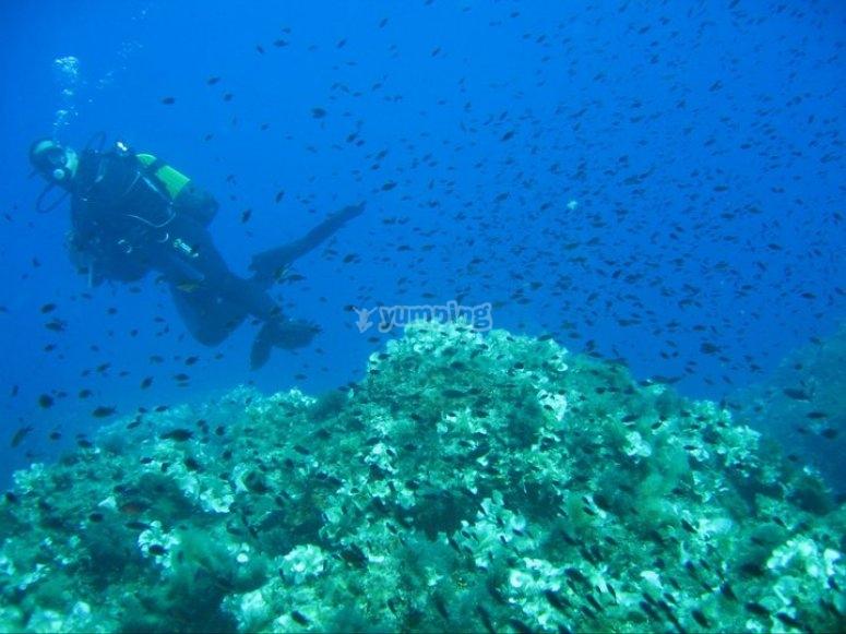 Nubi marine