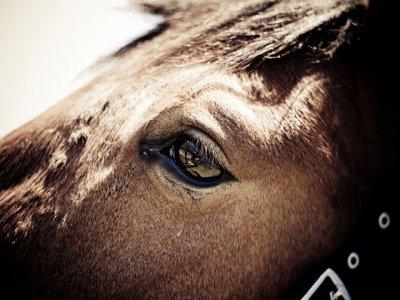 Club Horse Platania