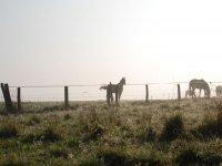 A cavallo a Benevento