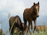 Magnifici cavalli
