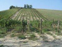 Nelle terre del vino