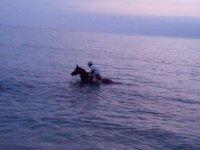 Cavallo in mare