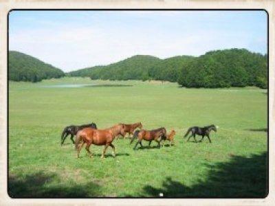Royal Hotel Montevergine Passeggiate a Cavallo