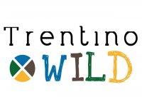 Trentino Wild Parapendio