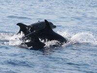 Amici delfini