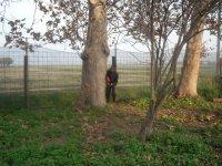 dietro l'albero