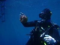 Incredible underwater fauna