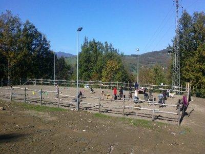 Cavalli di Sparta