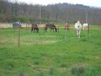 9 cavalli