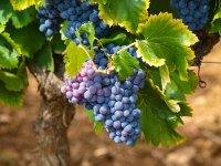 Da dove viene il vino