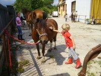 Preparando il cavallo alla sellatura
