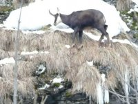 A contatto con la natura alpina