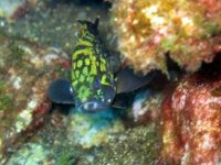 Diving a Pantelleria