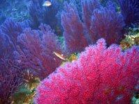 Un giardino di corallo