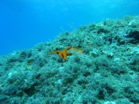 Object under water