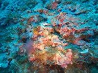 Natura sottomarina