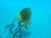 Abitanti marini