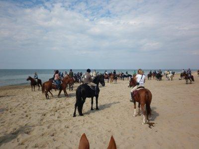 Tour a cavallo 5giorni Latina/Circeo+camerata+camp