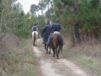 Natura e cavalli