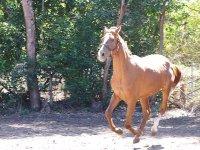 Cavalli vivaci