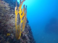 La flora e la fauna del mare