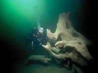Immersioni tra i segreti dell'oceano