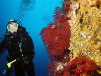 Scoprendo flora e fauna marina