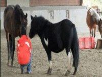 Contatto con i Pony