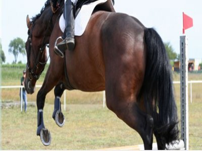 Centro Ippico Golden Horse