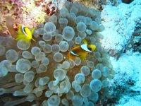 Pesci gialli e bianchi