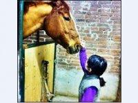 Prendersi cura dei cavalli