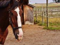 Uno splendido cavallo