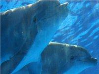 in mare coi delfini