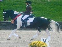 Discipline equestri preparazione gare