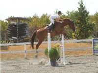 English riding school and Olympic disciplines