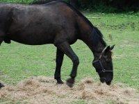 Cavallo in sosta